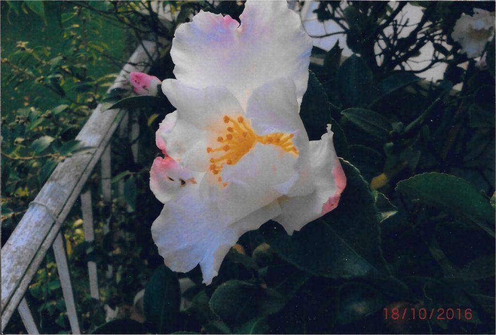 Fleurs de Michelle Chéneau