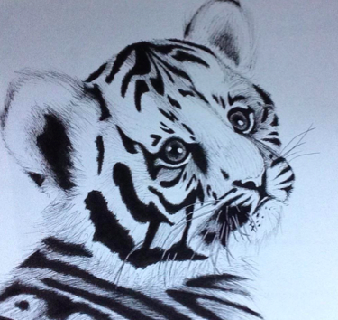 LGT N°4 Mai 2017 Tigre