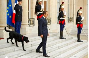 Macron et Nemo