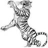 Visiter le lien menant aux Griffes du Tigre